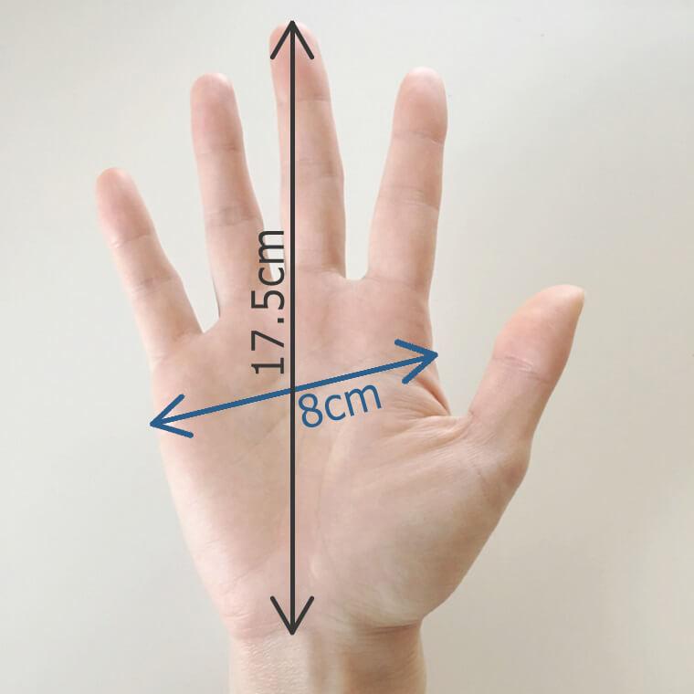 自分の手の平サイズ